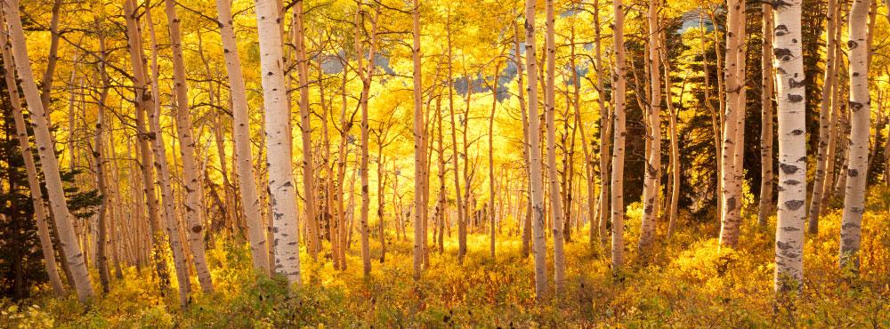 Autumn Glow at Powder Mountain – 54×20 Standard Photo Print (Glossy) Print