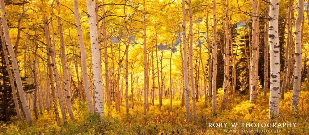 Autumn Glow at Powder Mountain Print