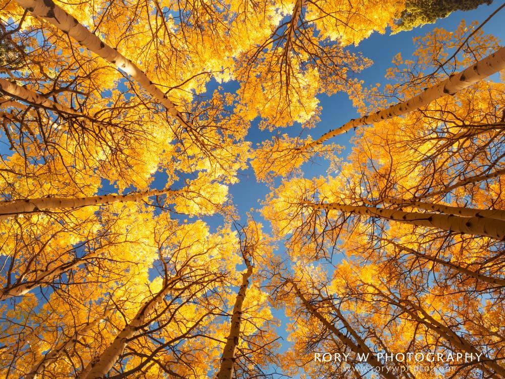 Fall Canopy Print