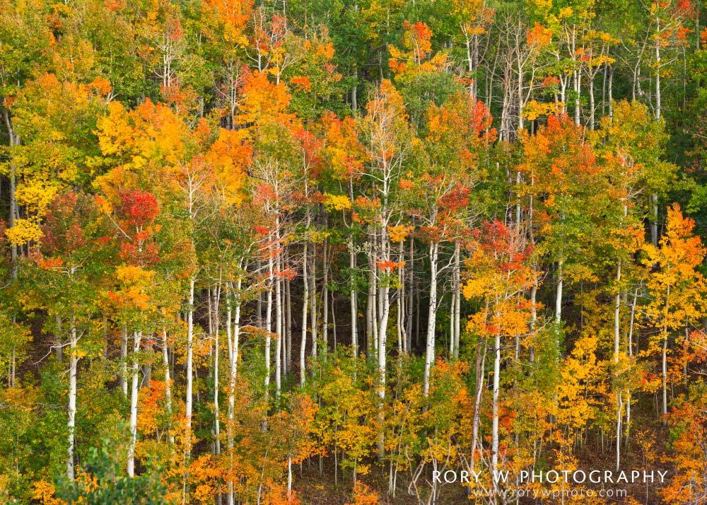 Autumn's Palette Print
