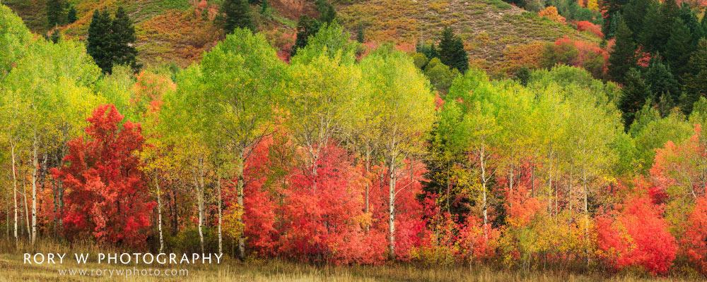 Fall at Snowbasin Panoramic Print