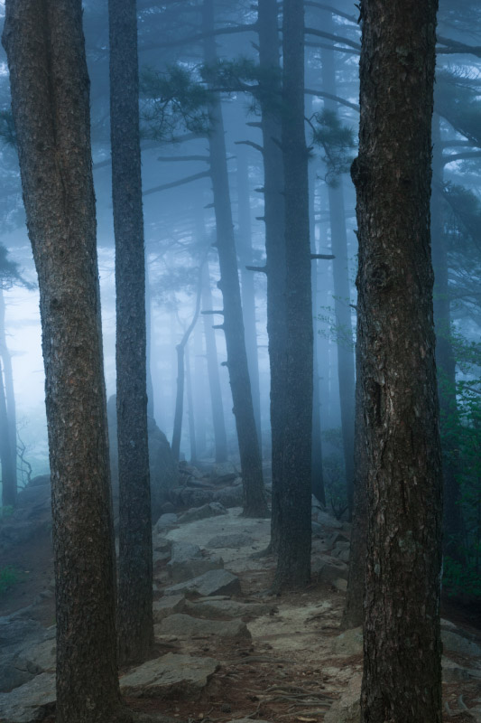 Huangshan China Ghostly Forest Print