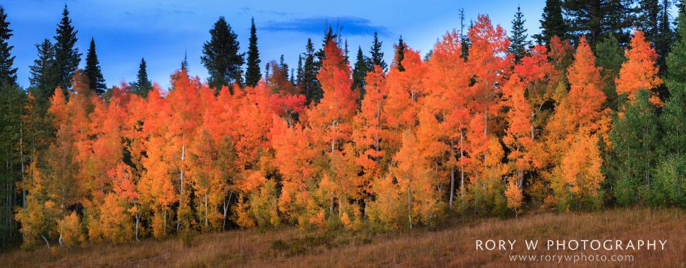 Autumn Reds Panoramic Print