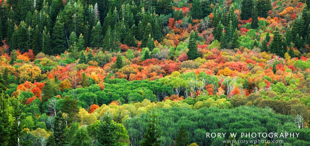 Snowbasin Fall Colors Print