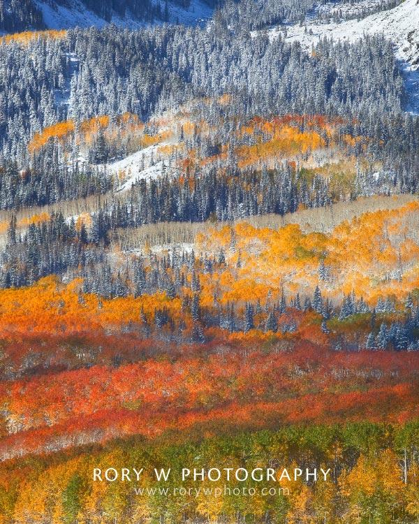 Painting of Seasons Print
