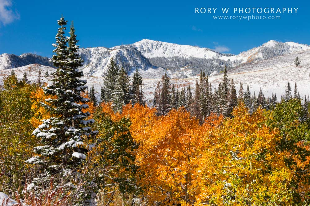 Seasons Of The Wasatch Print