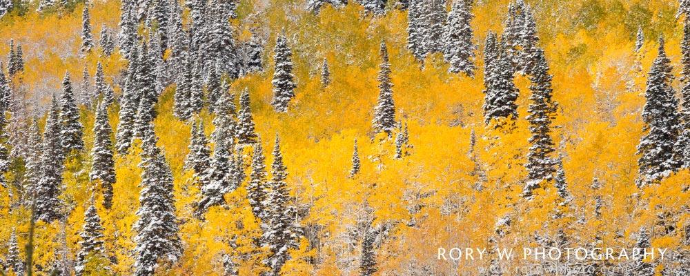 Mixed Seasons Panoramic Print