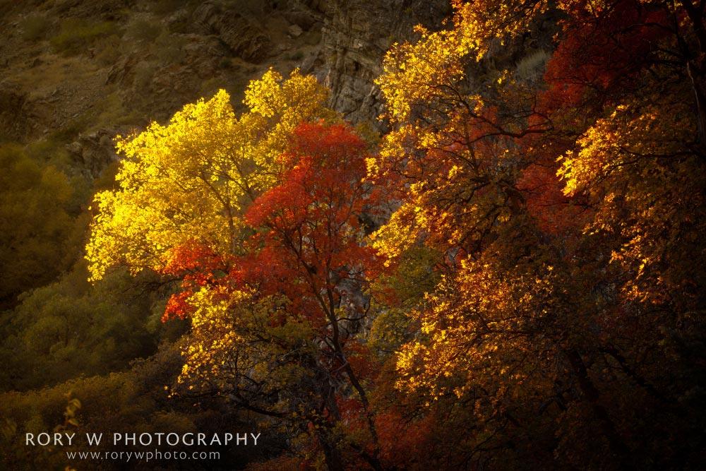 Fall's Last Light Print