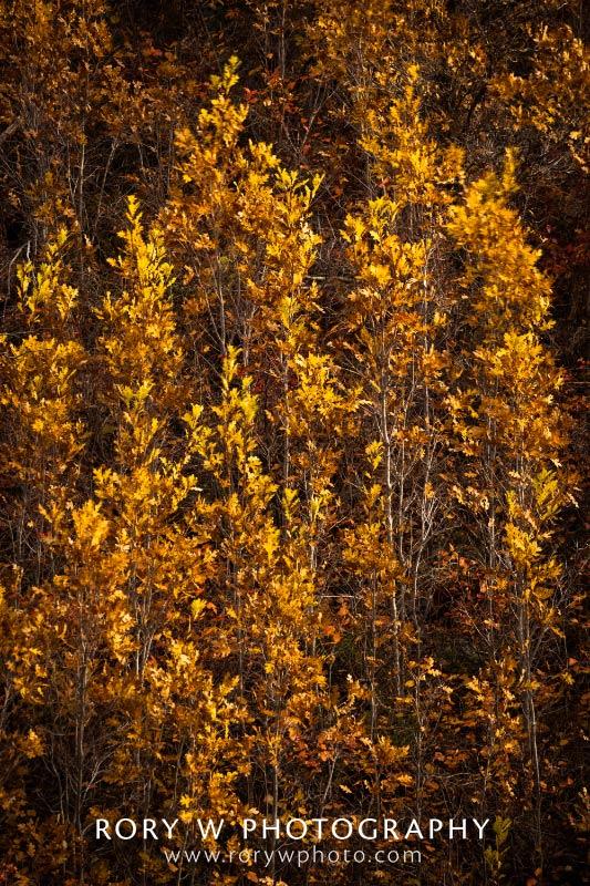 Autumn Abstract Print