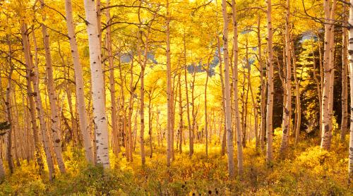 Autumn in Northern Utah Photo Gallery