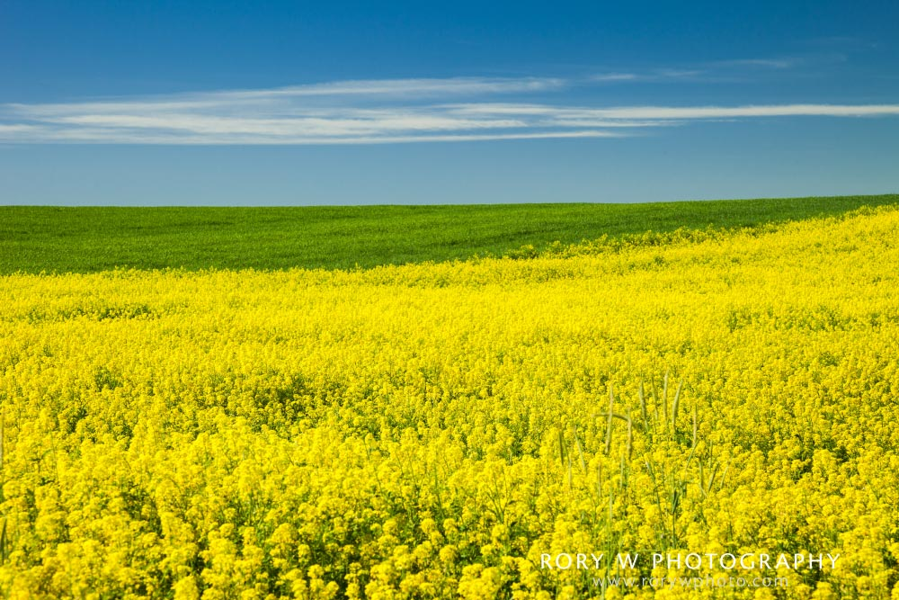 Colors of the Fields Print