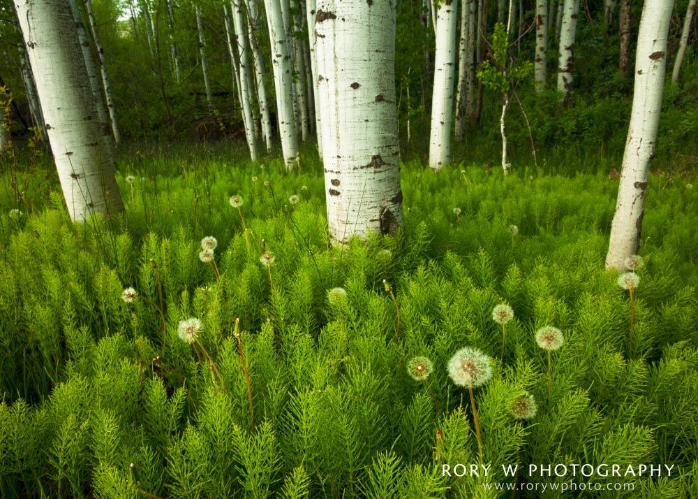 Patterns of Nature Print