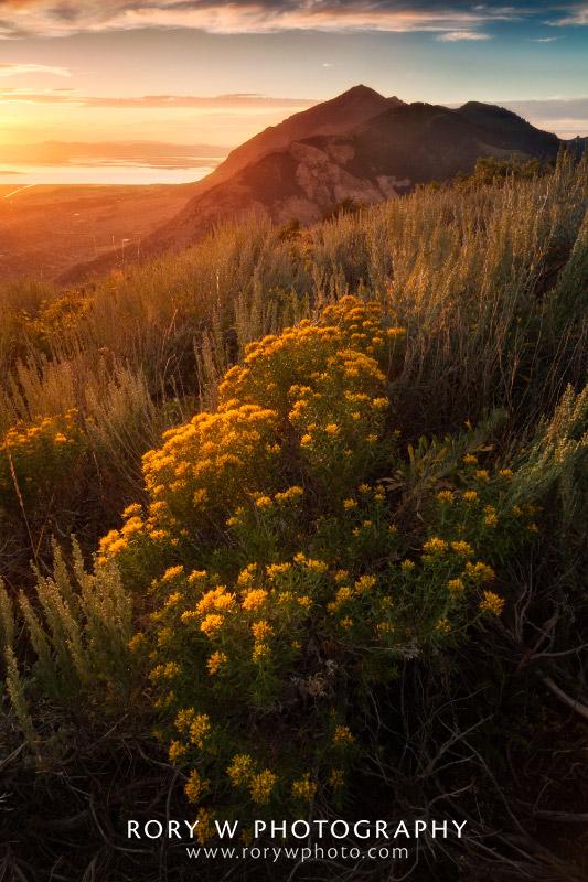 Summer Sunset Over Ogden Print