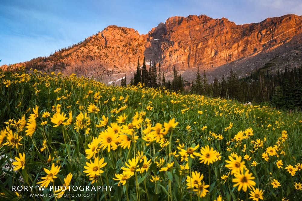 Wildflowers and the Setting Sun Print