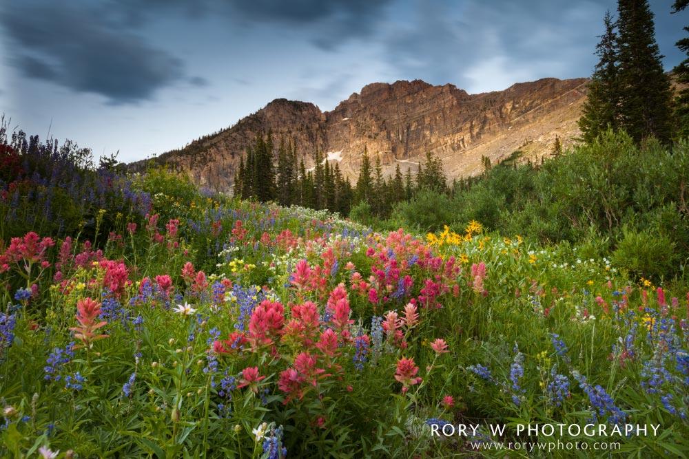 Evening Wildflowers Print