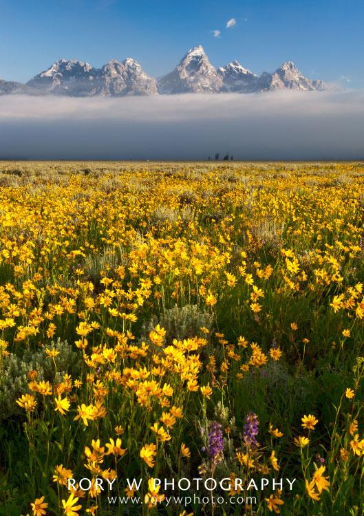 Wildflowers at Grand Teton National Park Print
